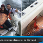 Encuentran una criatura nunca antes vista en las costas de Maryland