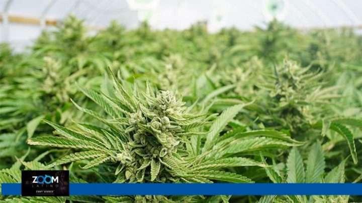 Alerta por sobredosis de drogas en la Capital