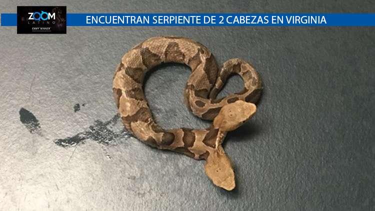 LA SERPIENTE DE DOS CABEZAS SERÁ TRASLADADAS A UN ZOOLÓGICO