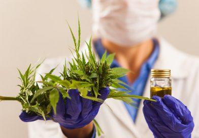 Legisladores de Maryland están considerando la posibilidad de legalizar la marihuana a partir de 2020.