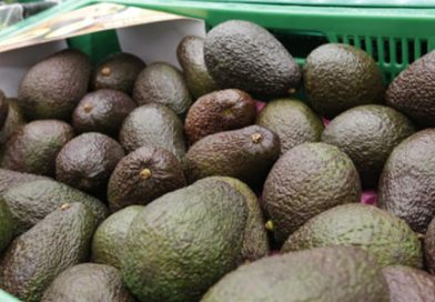 Posible brote de listeria en seis estados transmitida por aguacates (avocados).