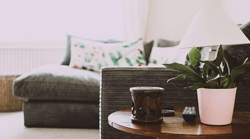 ¡Ponga plantas en su hogar esta primavera!