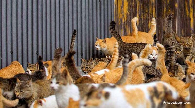 ¡Guerra contra los gatos! Quieren exterminar a miles de ellos.