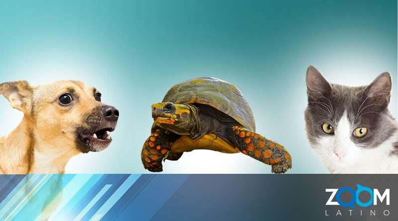Oficiales encontraron 59 perros, tres gatos y dos tortugas en el condado rural de Montgomery