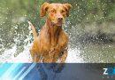 Algas peligrosas que provocaron la muerte de tres perros en Carolina del Norte
