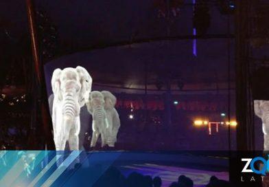 El circo alemán usa hologramas en lugar de animales vivos para una experiencia mágica libre de crueldad