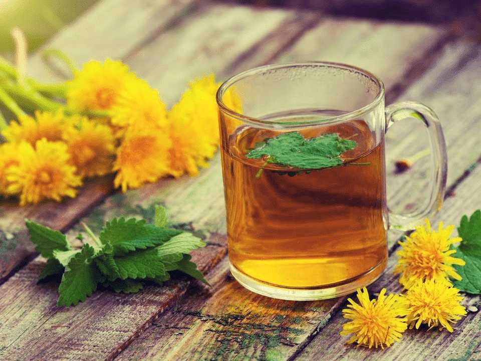 Estudios demuestran que el té de la raíz de diente de león mantiene el hígado sano