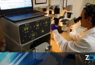 Estudios demuestran que se pueden eliminar las células cancerosas en dos semanas