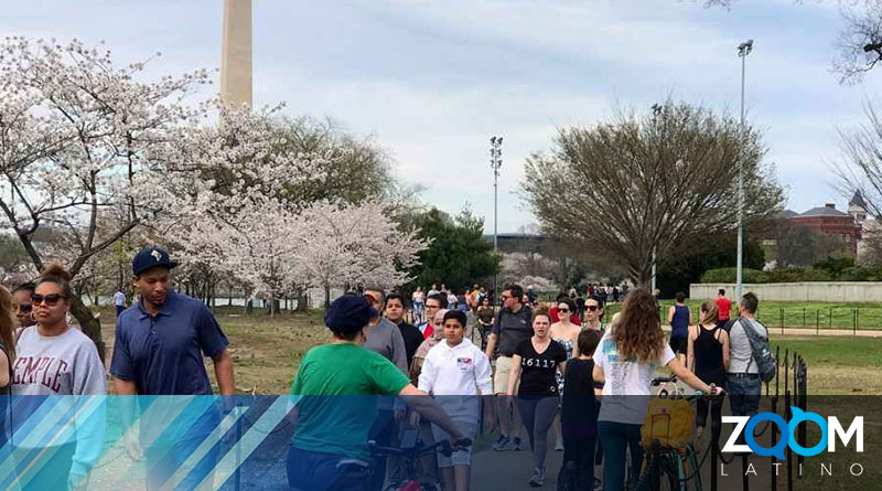 Multitud de personas asiste a Tidal Basin a ver las flores de cerezo