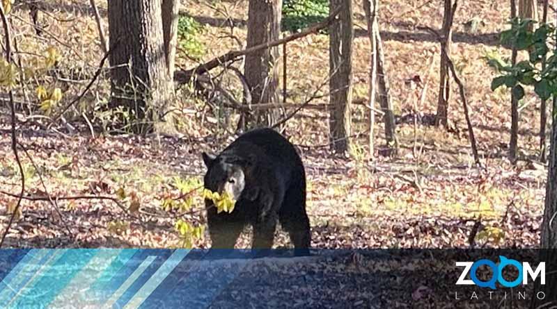 Residentes de DC reportan avistamiento de animales silvestre cerca de sus hogares