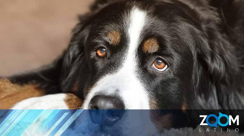 En Virginia un hombre es arrestado y acusado de crueldad animal