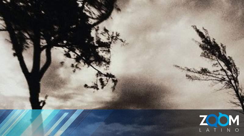 Vientos provocan la caída de un árbol con una familia dentro de la vivienda