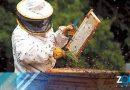 Apicultores muestran preocupaciones luego de tener los primeros avistamientos del avispón gigante asiático