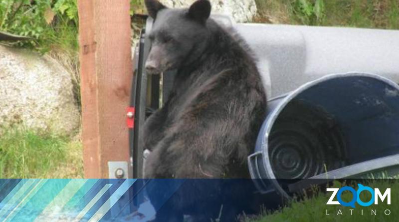 Residentes en Reston informan avistamiento de osos
