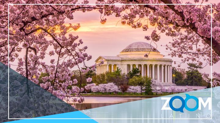 Los cerezos de Washington ya están en flor y se pueden admirar de manera virtual