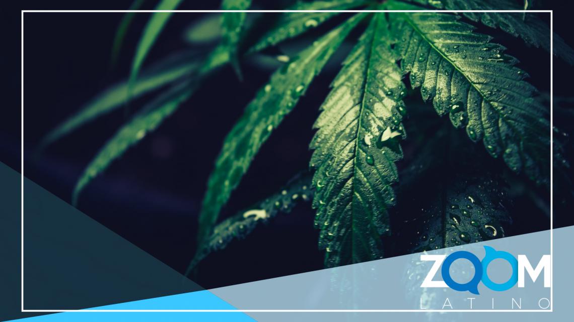 El gobernador de Virginia busca acelerar la legalización de la marihuana
